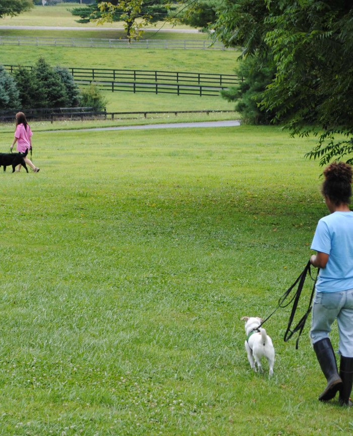 Shady Spring Pet Retreat Dog Boarding Kennel Carroll County Maryland