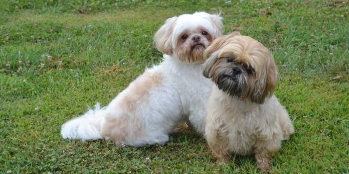 Shady Spring Pet Retreat Dog Boarding Kennel Carroll County Maryland