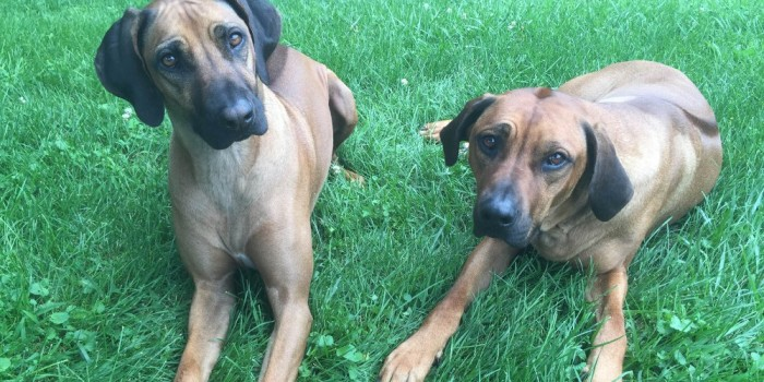 Shady Spring Boarding Kennels Discounted Dog Boarding Carroll County Maryland